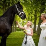 fotografie huwelijk bruiloft regio Eindhoven